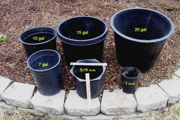 I Prefer The 15 Gal Sized Pots They Take More Soil Mix Which Can Get Expensive But You Dont Have To Water Them As Often A 5 Or 10 Gallon